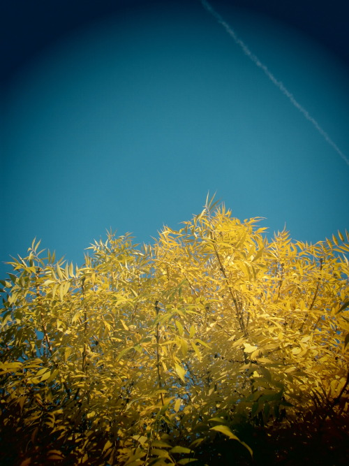 under a yellow tree…