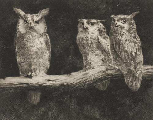 monsieurleprince:  Leonard Robert Brightwell (1889 - ?) - Owls