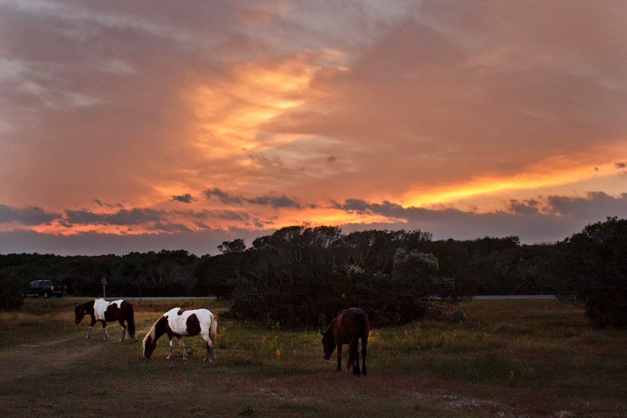 pony sunsets. Assateague Island National Seashore