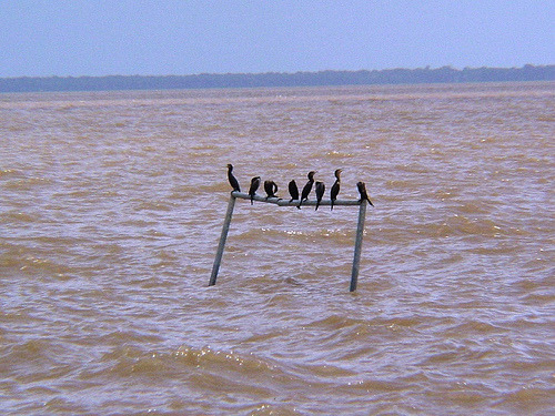 Only the ducks can use this Amazonian football pitch at high tide (image credit: flickr / Alexandre R. Costa)