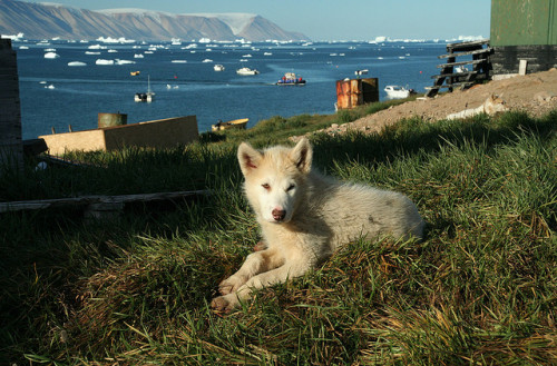Sled-dog summer vacation by sho photos on Flickr.