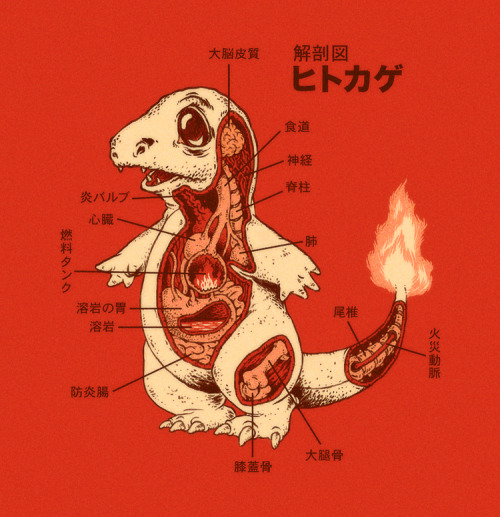 Pokemon Anatomy by Ryan Mauskopf / Website Tshirts available here!