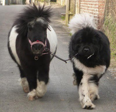 matociquala:  dorkilybeautiful:  Why yes, this is a dog and pony show.  I just made a noise with an awful lot of vowels in it.  aaaaaa-AAAAAH!