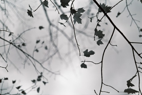 Leaves in black and white….