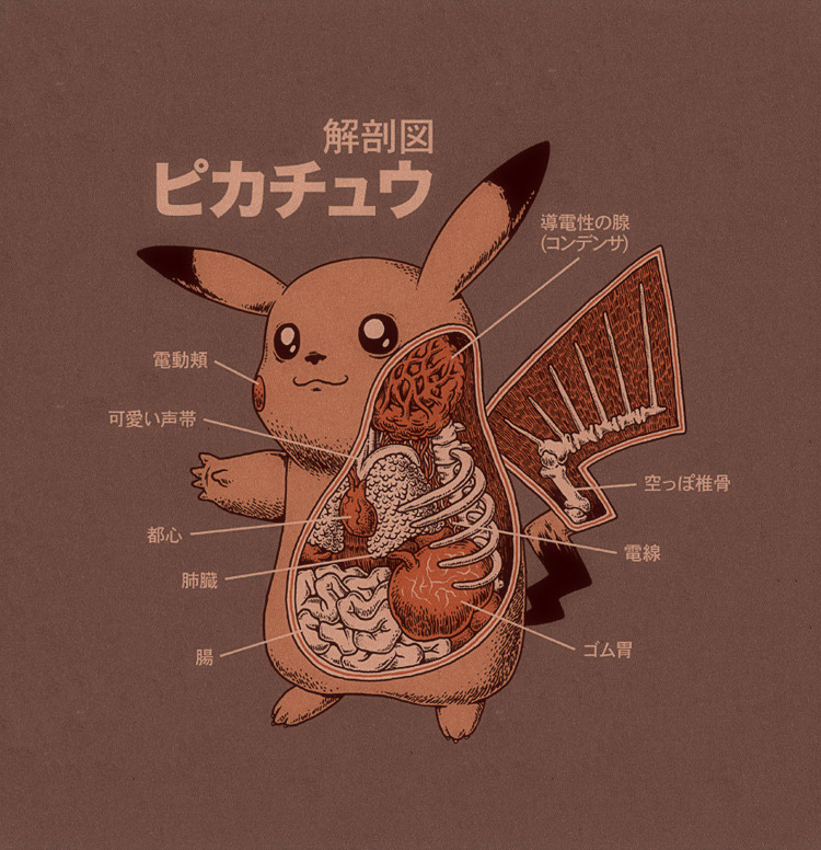garabating:  Pikachu Anatomy by *RYE-BREAD