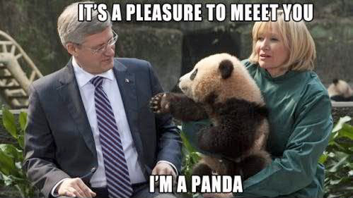 Of course Harper refuses a handshake from a cute bear. Fuckin' dick.