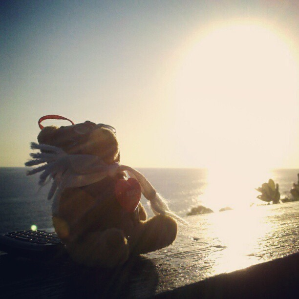 Heinz chillaxing at the beach. (via Photo by mesideesnoires • Instagram)