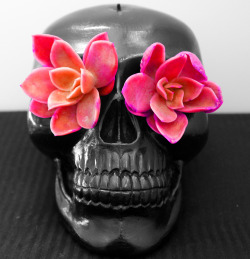 Cool wannahave ~  Skull money saver