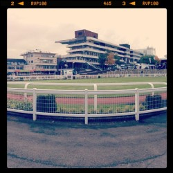 Showcase at Cheltenham Racecourse #showcase #horseracing #newseason #jumps #timeform #radio #cheltenham #racecourse #photooftheday #swag  (at Cheltenham Racecourse)