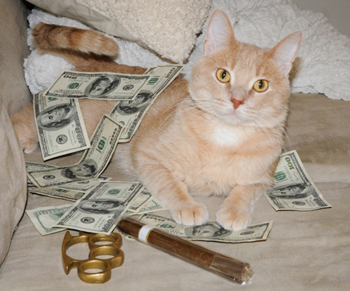 crushabledotcom:  Cash cats!