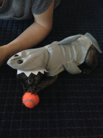 paralol:  paramoredogs:  Bill having a better Halloween costume than all of you.  doesnt Taylors nephew? have an obsession with sharks…