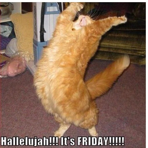 I love this #friday #thankgod #kitty #cats #funny #silly #pets Ehat if
