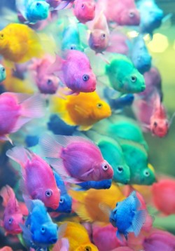 (via Brightly coloured fish | Murray Mitchell)