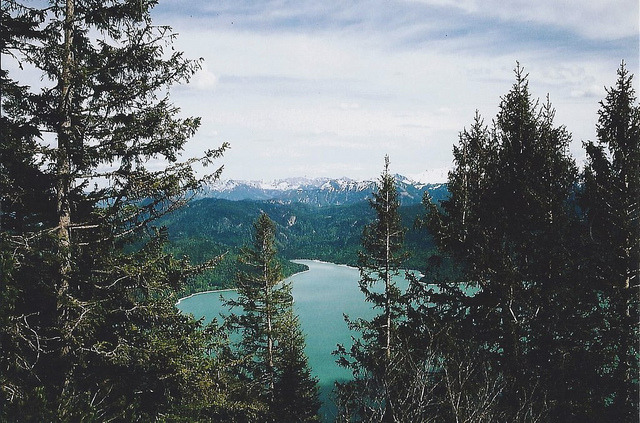 forbiddenforrest:  . by Careless Edition on Flickr.