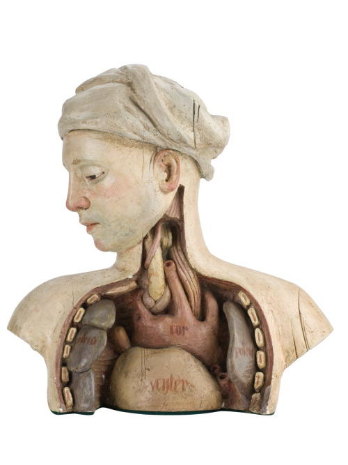 Plaster statue showing a dissected chest, England, 1970 The skin, muscles and ribcage have been removed from the chest of this plaster bust to show the lungs, heart and liver. The sculptor, Christopher Hobbs (b. 1945), used a German print from the 1400s as the basis for this model. Anatomical drawings and models were important teaching aids as bodies were difficult to preserve and few were available for dissection. Models could also be used to pick out and emphasise certain features, in this case the internal organs. The statue was used in the 1971 Ken Russell film The Devils, which was about the corruption of the church in France during the 1600s. It was donated to the Wellcome Institute by Pinewood Studios.