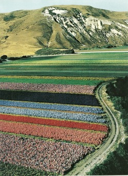 vintagenatgeographic:  Lompoc Valley, California National Geographic | April 1984