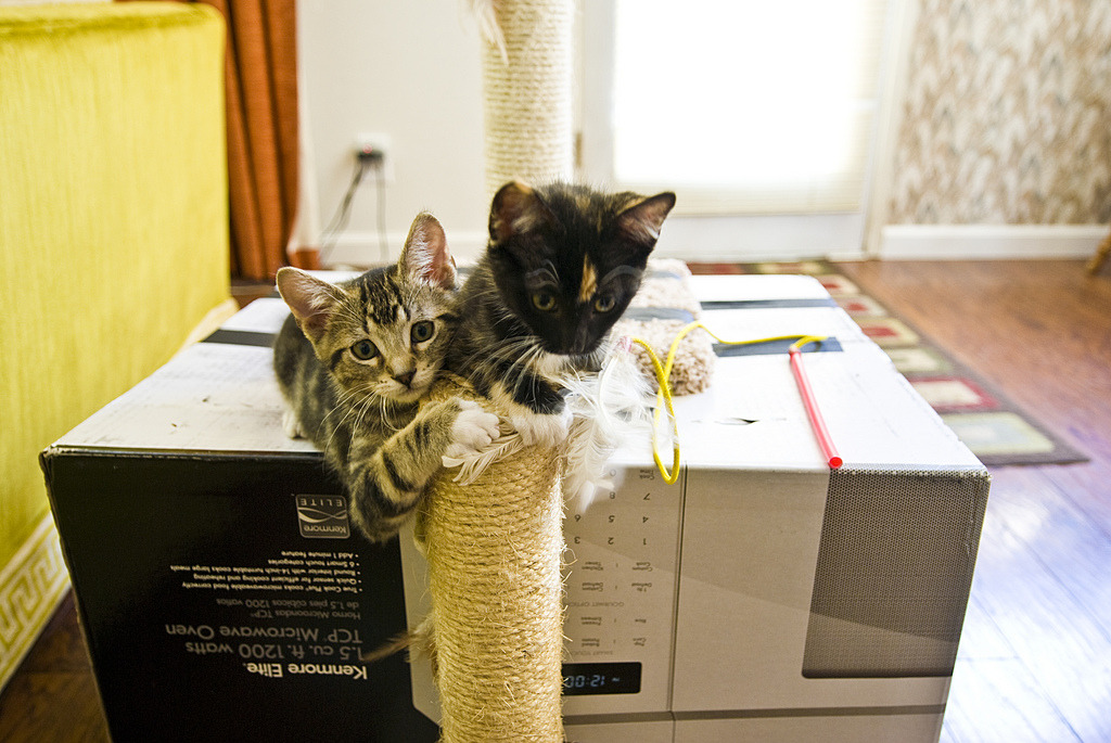 """It's MY scratching post!"" Photo by ©licitinez"