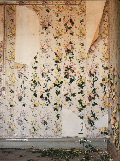 scarlettshaney:  Tim Walker, Rose Wallpaper, London.