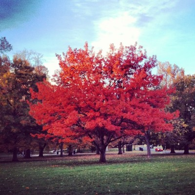 I love fall. (at Cheesman Park)