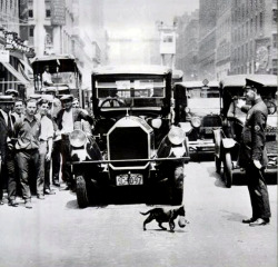 collective-history:  Mother Cat Stops Traffic, New York, July 1925  awwwww I LOVE THIS!!