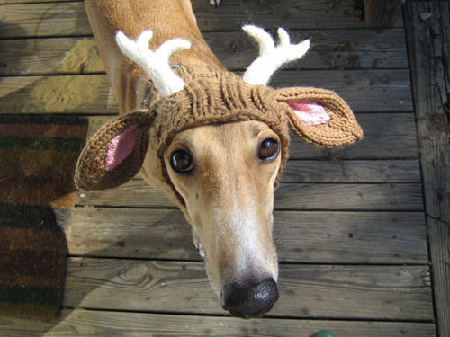 i guess it´s time for christmas yuck now?  that is a nice hat, dog!