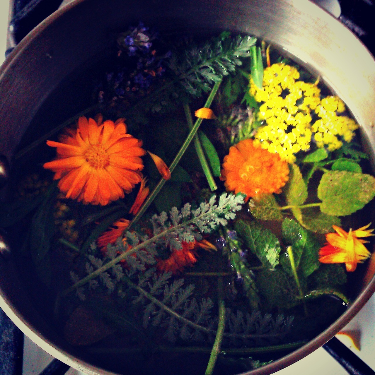 moon-medicine:  I made an Herbal Shampoo with my garden herbs yesterday :) An infusion of Calendula, Moonshine Yarrow, Lavender, and Apple Mint plus two vitamin E capsules.