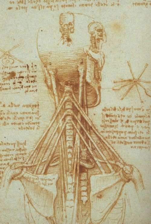 Leonardo da Vinci- Anatomy of the Neck (1515)