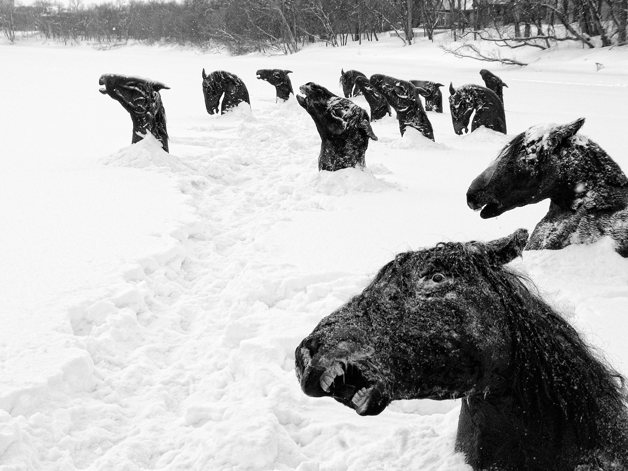"thekhooll:  Frozen ""During 1926 cold winter, all the horses from the hippodrome fled away after the stables went on fire. Their only scape-way was the river. But they all froze before managing to reach the opposite side. Their sculptural heads with terror still in their eyes served as a leisure park that season. I wonder in which moment the following spring carried them out into the sea, without anyone noticing."" By Guy Maddin,  My Winnipeg (film still)"