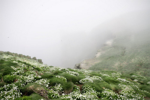 Drangey by Maria Kristin Steinsson on Flickr.  misty mountain