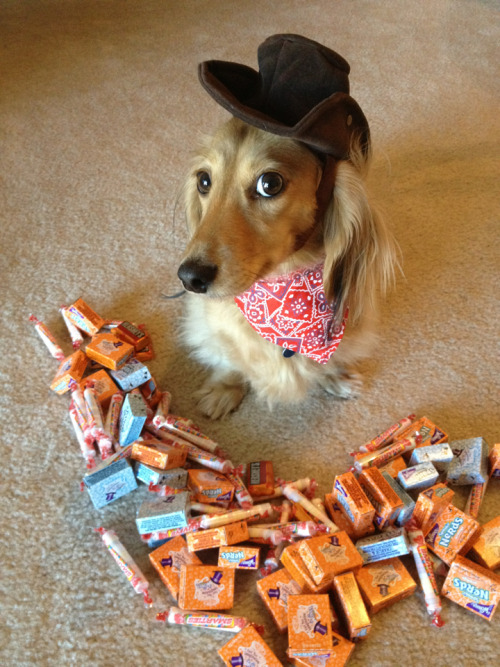 Sheriff Harry is ready for Halloween!