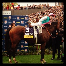 Frankel. Best in the world. #frankel #ascot #championsday #bestintheworld #champions #horse #horseracing #photooftheday #swag  (at Ascot Racecourse)
