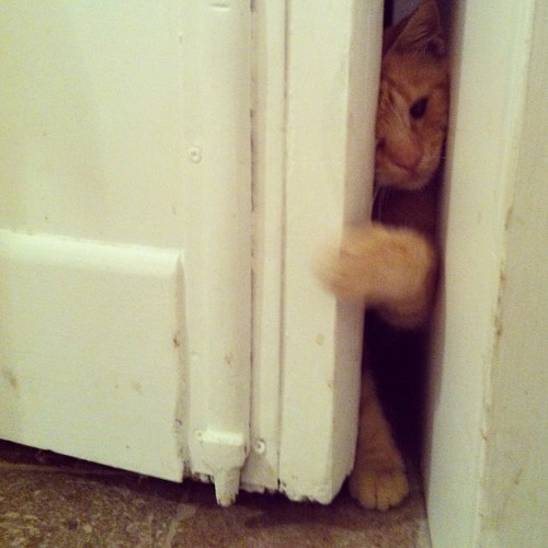 """Open this motherfucking door, man"" 🐱 - #lollo"