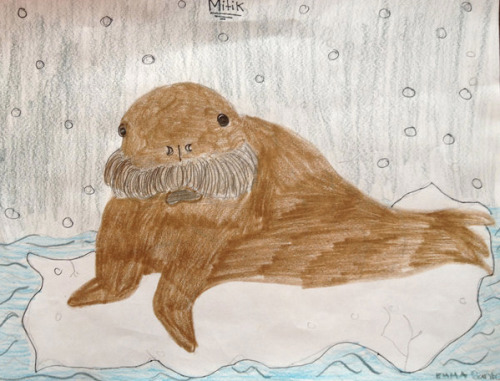 Emma, 11, Tuckahoe, N.Y Kids Draw the News: Baby Walrus Arrives in New York