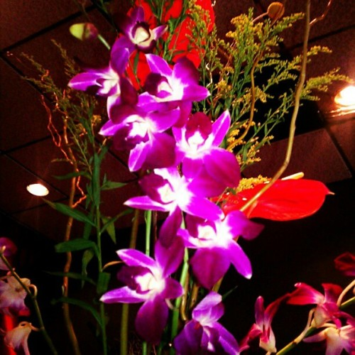 Bloomed #Fuchsia #Orchids. #Flowers #colors (at Taiwan Restaurant Willow Glen)