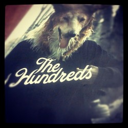 #theHUNDREDS #theHUNDREDSareHUGE #DOG #WOLF #sWag
