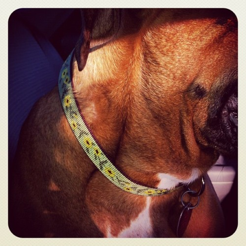 Molly got a pretty new collar! Flower Power!!