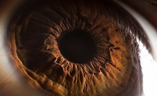 "thesciencellama:  ""Using the eye as a 'window to the brain'"" With a quick and relatively cheap optical scan using Optical Coherence Tomography (OCT), the extent to which brain damage due to Multiple Sclerosis (MS) can be measured accurately. MS is an autoimmune disease where our own cells attack and damage certain areas, in this case it is a fatty protein called myelin that insulates and helps send signals in nerves corresponding to motor control of speech among other things. Via hopkindsmedicine.org Gif of OCT scan of fingertipPhoto of retinal layers"
