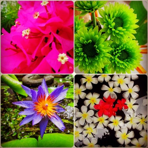 Flowers around the island of Koh Tao - Thailand (at Ban's Diving Resort)