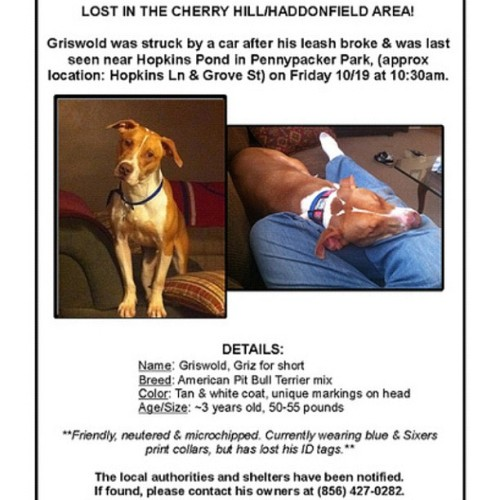 #Haddonfield #CherryHill #lostdog #lostpet #missing