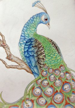 Peacock by ~BenjiiBen