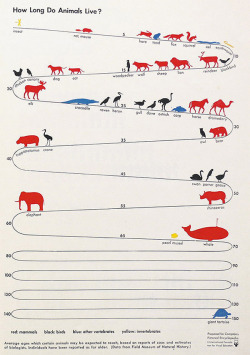 pathandpuddle:  How long do animals live?