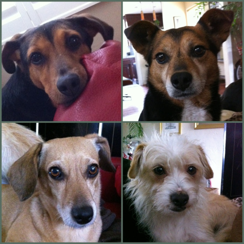 Ethel, LC, Tallulah and Ben all looking quite adorable on this fine Saturday.