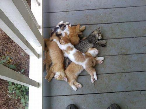 daily-dose-of-derp:  ah, so thats where i left my pile of cats