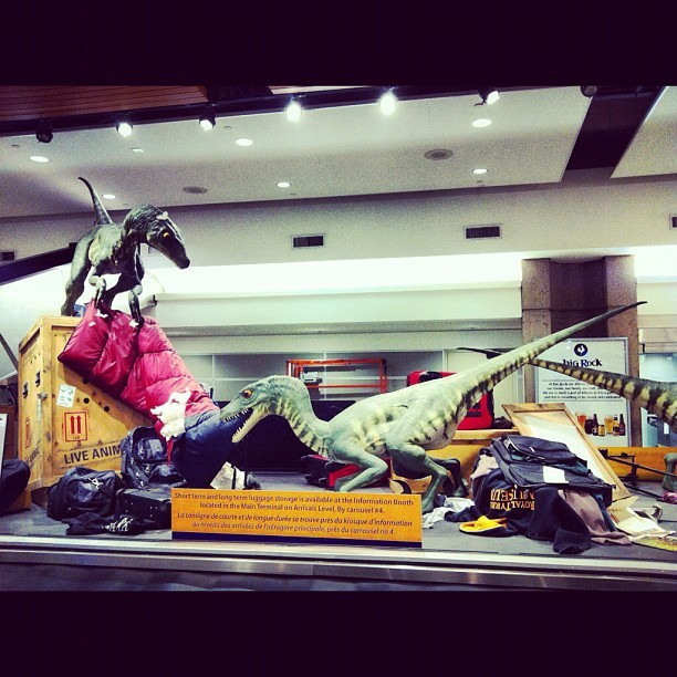 Saw this, thought of @kittytheshegeek. #yyc #calgary #airport #raptors #dinosaurs #lol