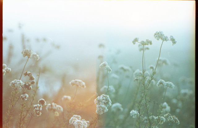 Mt. Helix - 35mm expired film by dakotabrinkert on Flickr.