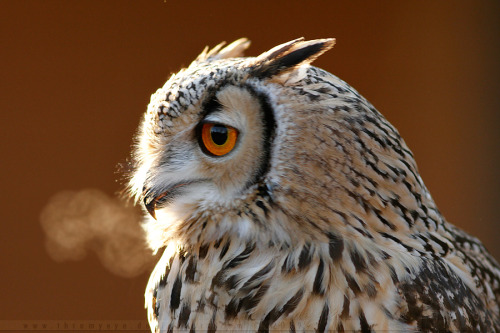 dogs-and-sports:  Smoking Owl by *thrumyeye