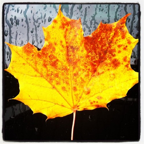 Autumn days ❤ (at Alingsås)