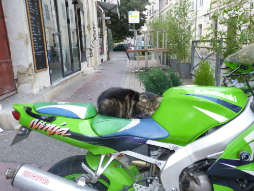 get of there cat. you are not a biker. you don't even have a helmet.