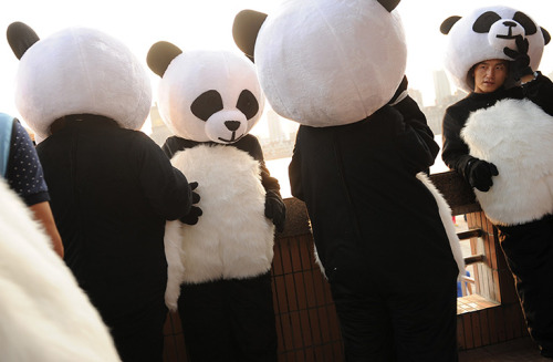 guardian:  Shanghai, China: People in panda costumes take a break during a contest to become a world panda ambassador From 24 hours in pictures Photograph: Peter Parks/AFP/Getty Images