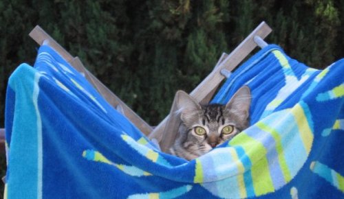 get out of there cat. that is not a hammock.